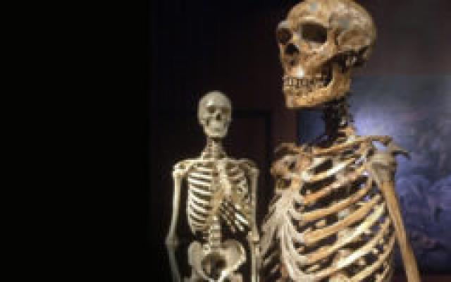 Skeletal evidence